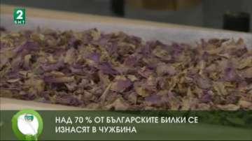 Над 70% от българските билки се изнасят в чужбина