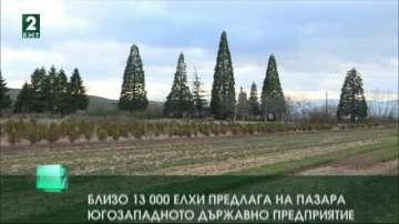 Около 13 000 елхи предлага на пазара Югозападното държавно предприятие