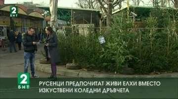 Русенци предпочитат живи елхи вместо изкуствени коледни дръвчета