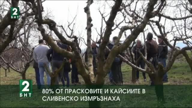 Близо 80% от плодните пъпки на прасковите и кайсиите в