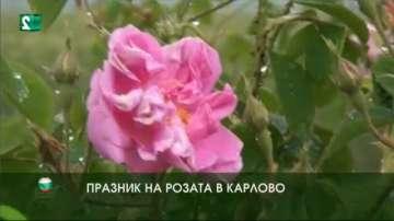 Празник на розата в Карлово