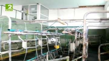 Млекопроизводители и животновъди излизат на протест