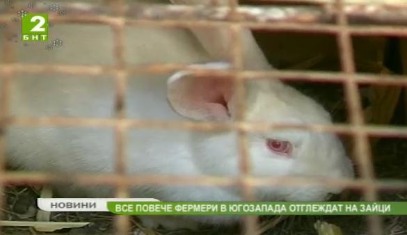 Все повече фермери в Югозапада отглеждат зайци