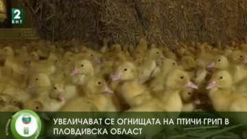 Увеличават се огнищата на птичи грип в Пловдивска област