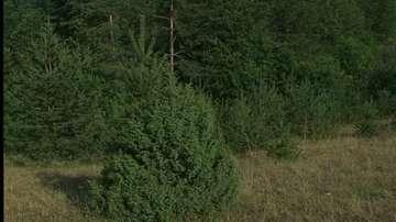 Горите в България са нараснали с 300 хил. хектара