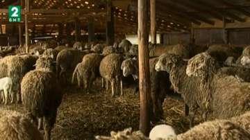 Фермери и овцевъди излизат на протести