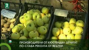 Производители от Кюстендил очакват по-слаба реколта от ябълки