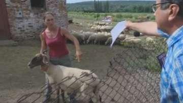 Съдът отмени глобата на животновъда Ана Петрова от Болярово