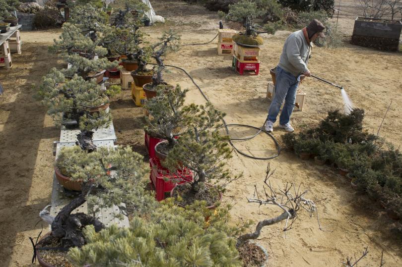 Японски градинар отправи отчаяни призиви от социалните мрежи към крадците,