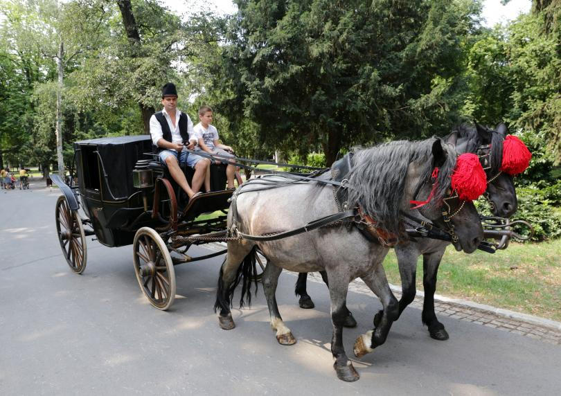 снимка 5 Борисовата градина на 135 години (СНИМКИ)