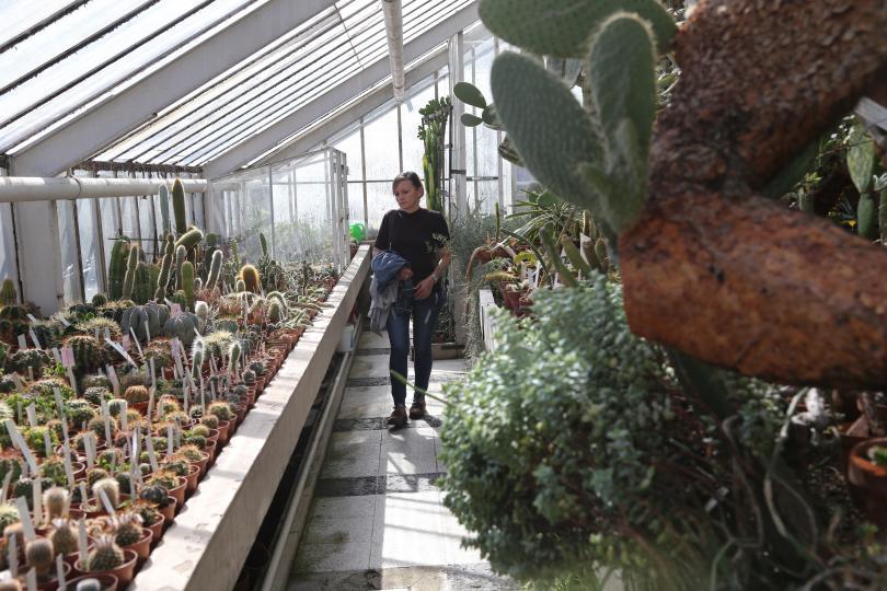 Снимка: Ботаническата градина на БАН пази растения, свидетели на две войни