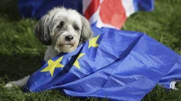 Кучешко шествие срещу Брекзит