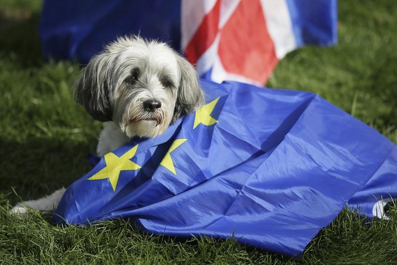 Необикновен протест срещу излизането на Великобритания от Европейския съюз се