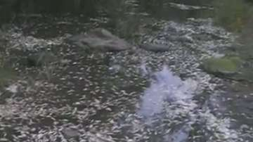 Умряла риба в река Караагач край Китен