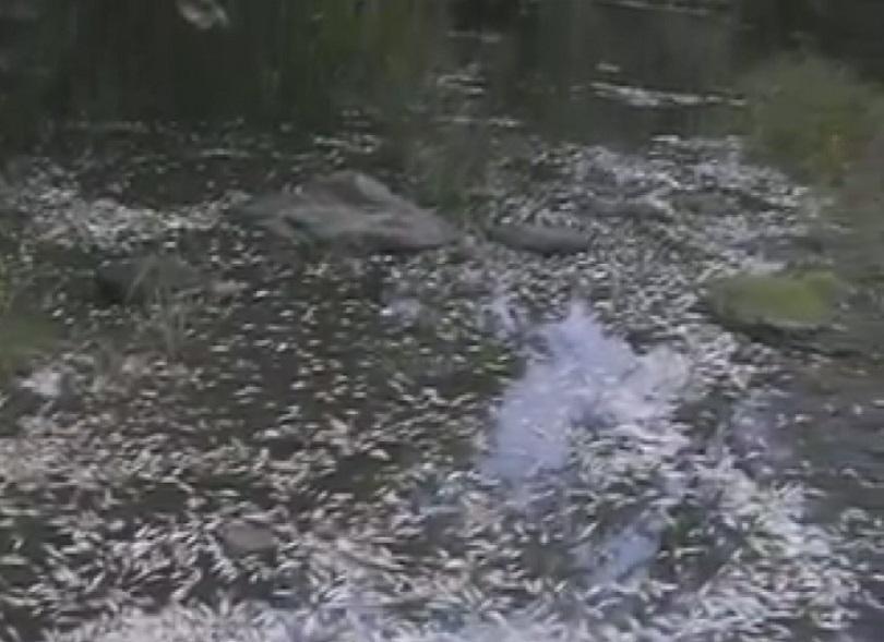 умряла риба река караагач китен