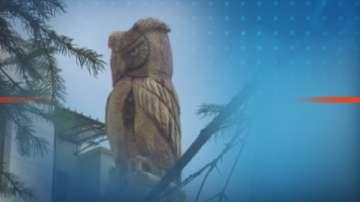 Скулптор с резачка дава нов живот на дървета във Враца