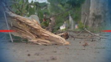 Десетки сигнали за материални щети след силната буря в София, Пловдив и Перник
