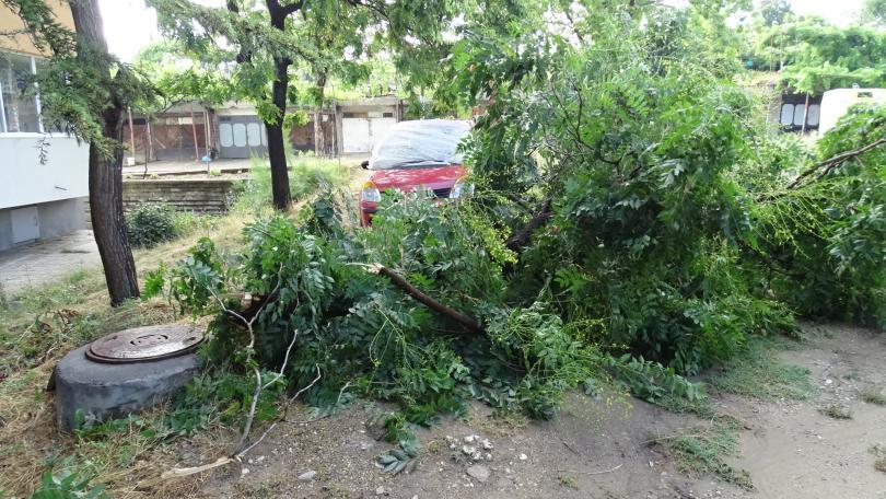 снимка 2 Буря нанесе материални щети в Благоевград (ВИДЕО + СНИМКИ)