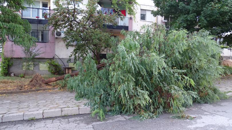снимка 4 Буря нанесе материални щети в Благоевград (ВИДЕО + СНИМКИ)