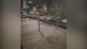 Десетки сигнали за паднали дървета и клони след бурята в София