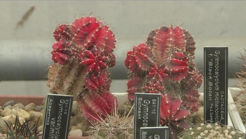 Около 700 кактуса от откритата експозиция в Ботаническата градина в