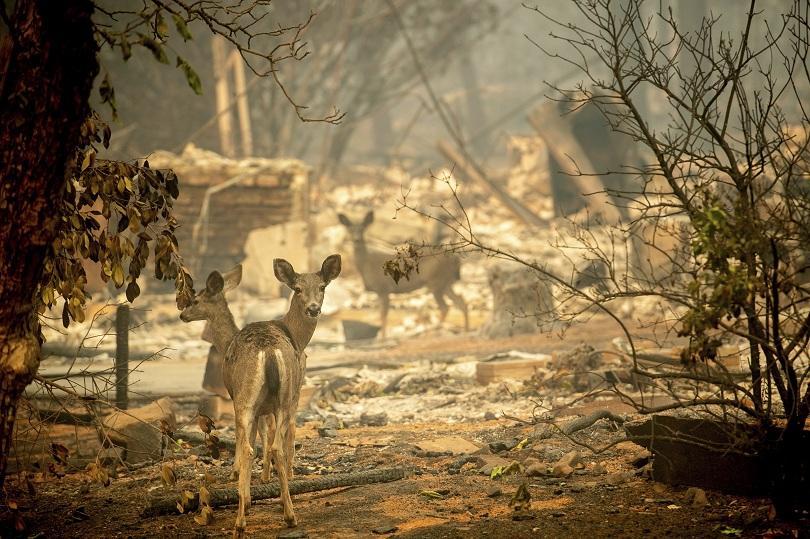Още жертви на пожарите в Калифорния. Според местните власти те