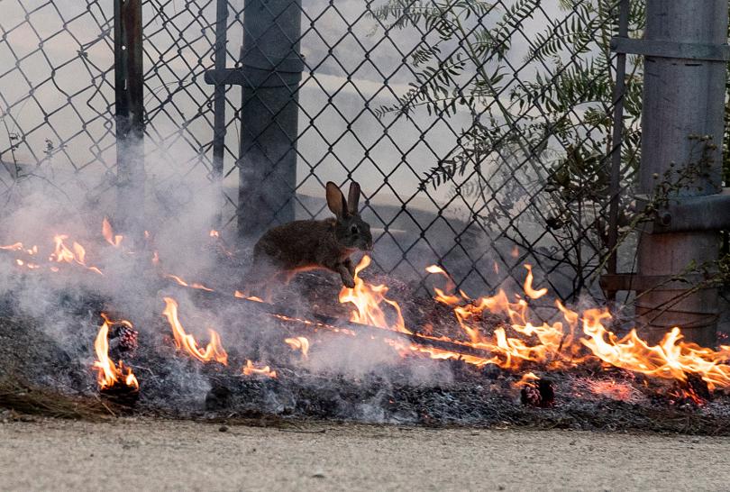 снимка 1 Евакуираха 100 000 души заради пожарите в Калифорния