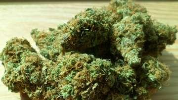 Албанската полиция задържа 204 кг марихуана