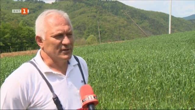 Фермер, който отглежда сини сливи в района на Правец принуди