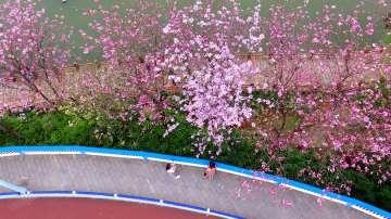 Хиляди туристи се радват на пролетните цветове в Китай