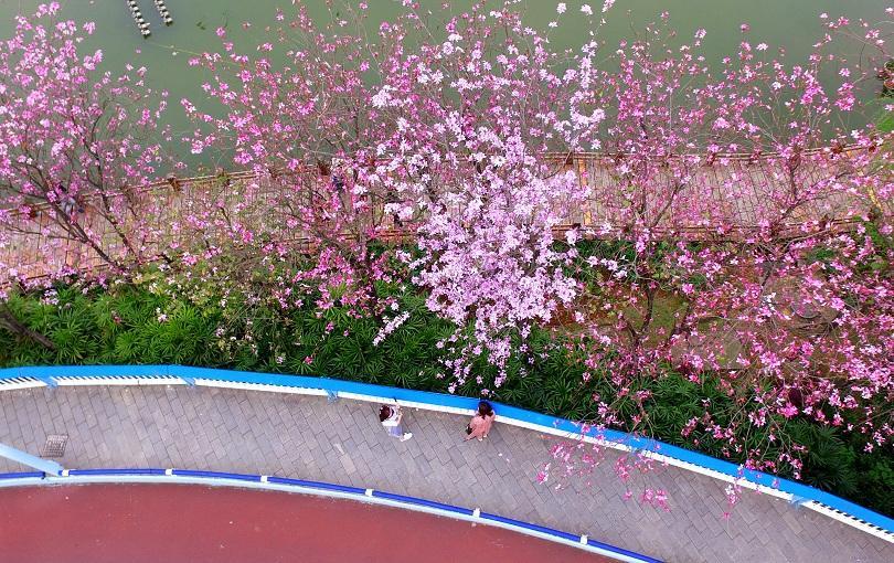 Цъфнали различни цветя, храсти и дървета привличат много хора в