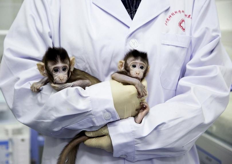 В Китай клонираха две майумини, като новината предизвика бурни реакции.