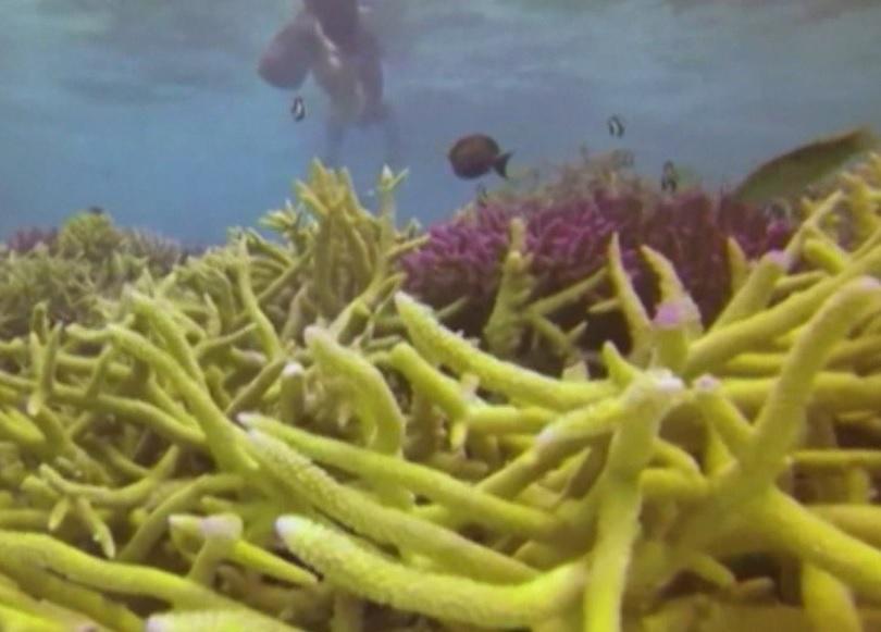 Зелена светлина: Глобалното затопляне пълзи към дъното