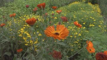 Все повече европейци предпочитат градското селско стопанство