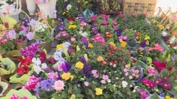 Проверяват за търговия със защитени цветя в Благоевград
