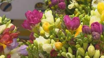 Цветя за дамите на 8-ми март