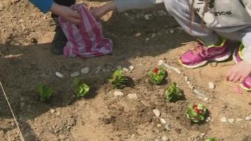 Деца засадиха цветя във формата на антична мозайка в Сандански