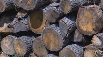 Извършени са 240 000 проверки за незаконна сеч и нарушения в горите