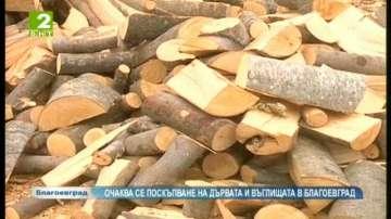 Очаква се поскъпване на дървата в Благоевград