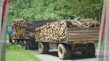 Дефицит на дървесината за преработка отчитат през зимния сезон