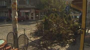 Оставиха отсечено дърво на тротоара на улица Иван Асен II в София