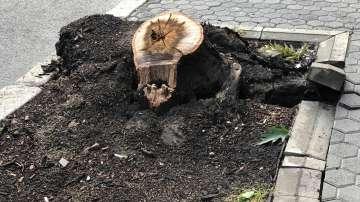 Камион събори дърво на булевард Дондуков в София