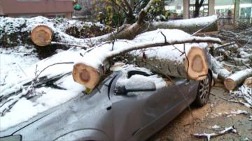Огромно дърво се стовари върху автомобил в Пловдив