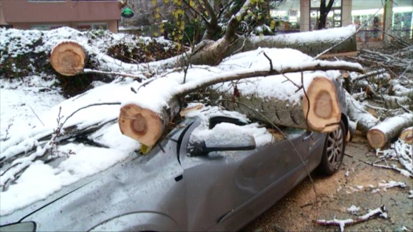 Снимка: Огромно дърво се стовари върху автомобил в Пловдив