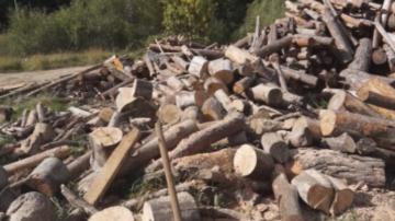 Африканската чума по свинете създава проблеми за дърводобива