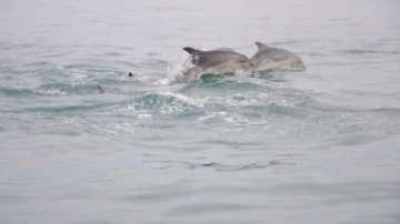 Премиерът ще свика ресорните министри заради проблема с мъртвите делфини