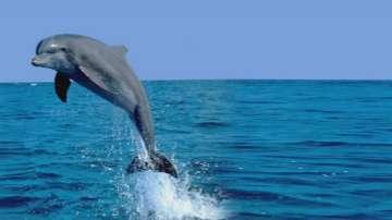 Делфините - най-атрактивните обитатели на Черно море