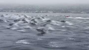 Танц на делфини край Лагуна бийч