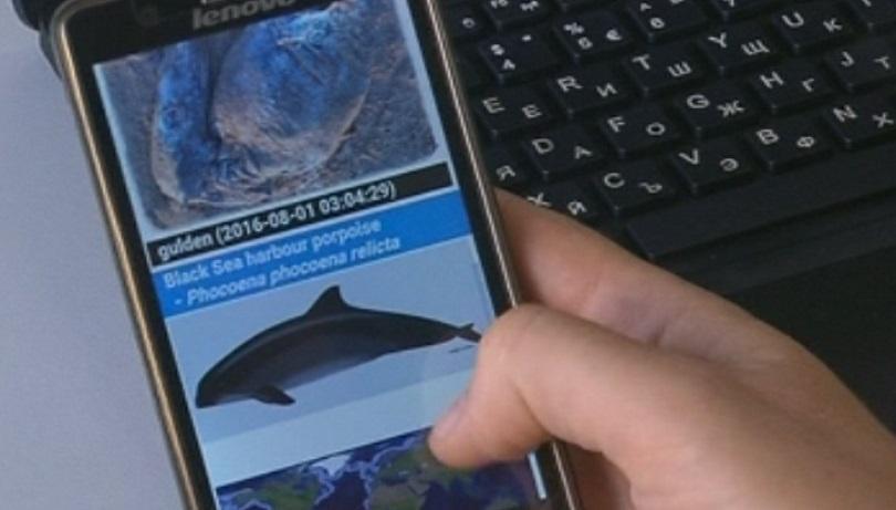Мобилно приложение дава информация за мъртви делфини