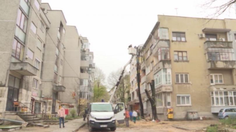 Снимка: Недоволство срещу изсичането на дървета в центъра на Добрич